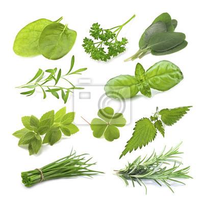 Wall mural herb