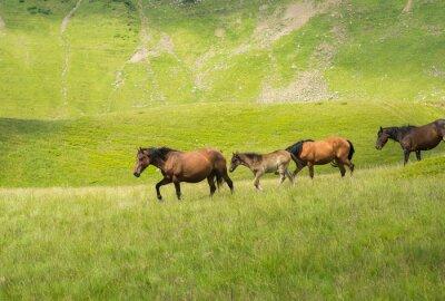 Wall mural Herd of horses walking along a mountain meadow