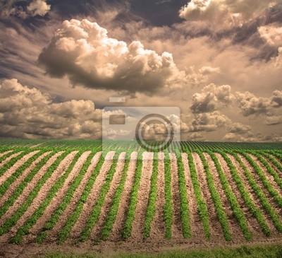 High Resolution Farm