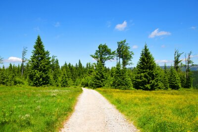 Hiking trail in spring landscape. National park Bayerische Wald, Germany.
