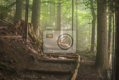 hiking trail in the mountains leading through natural misty forest