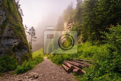 hiking trail in the mountains leading through the gorge on a foggy morning-The Szopczański gorge (Przełęcz Szopka),Pieniny,Poland