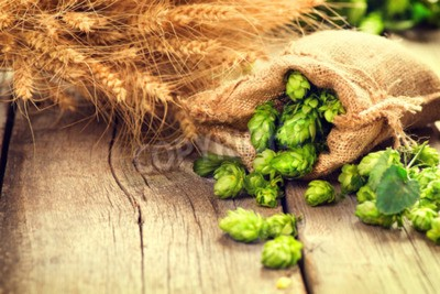 Wall mural Hop in bag and wheat ears on wooden cracked old table. Beer brewery concept. Ingredient for brewing beer. Beauty fresh-picked hop cones and wheat closeup. Sack of hops and sheaf of wheat on vintage ba