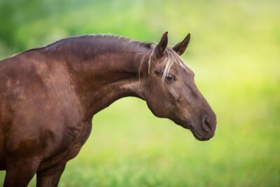 Horse close up portrait on green background