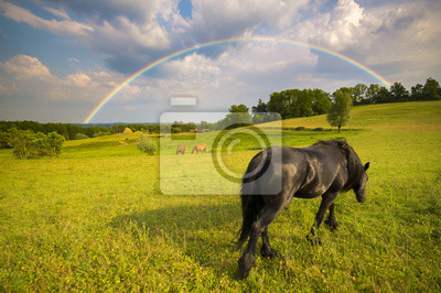 horse grazing in the meadow, in the background storm clouds and colorful rainbow