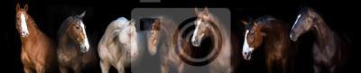 Horse group portrait at black background for banner