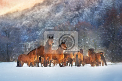 Horse herd in motion on winter snow landscape at sunset