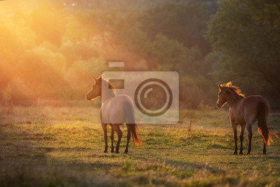 Horse herd  in sunlightwith dust at summer pasture