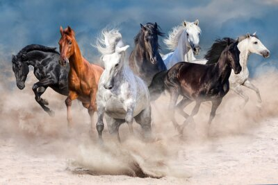 Wall mural Horse herd run in desert dust storm
