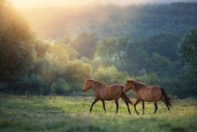 Horse herd run in sunlightwith dust at summer pasture