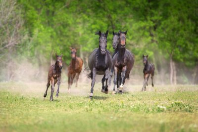Horse herd with foals run free on pasture