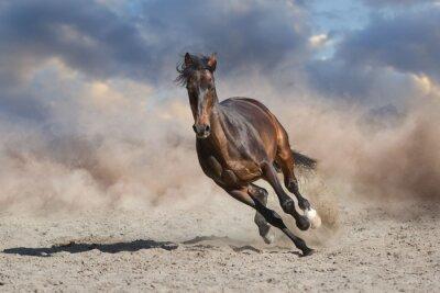 Wall mural horse in desert