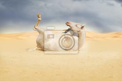 Horse lying in desert