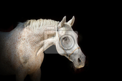 Wall mural Horse on the black background