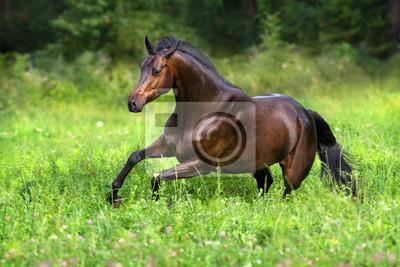 Horse run free on spring field