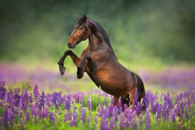 horse running in a field