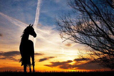 Wall mural horse silhouette at sunset