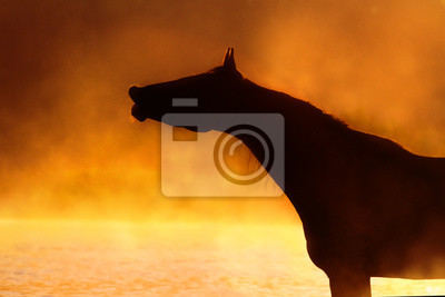 Horse silhouette portrait in summer fog sunrise in river