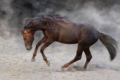 Horse with long mane portrait in motion