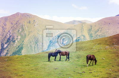 Wall mural Horses couple. Beautiful horses grazing in the mountains.