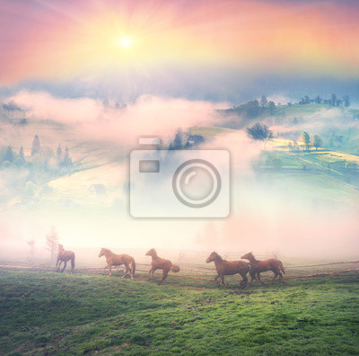 Wall mural Horses in the fog at dawn