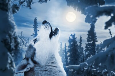 Wall mural howling to the moon