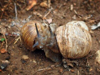 Hugging snails