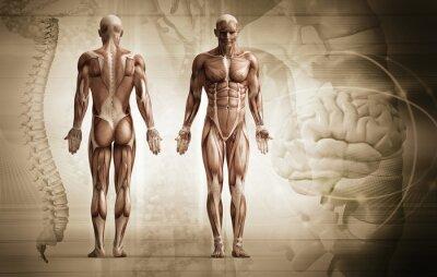 Wall mural human body