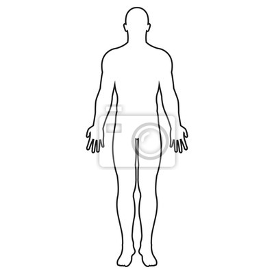 Wall mural Human body silhouette. Vector. Isolated.