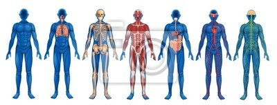 Wall mural Human Body Systems