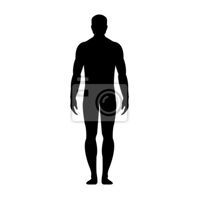 Wall mural Human front side Silhouette. Isolated on White Background. Vector illustration.