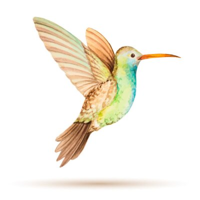 Wall mural Hummingbird