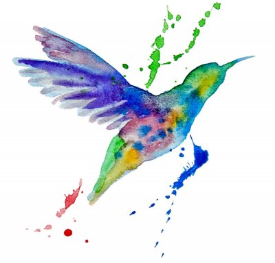 Wall mural hummingbird multicolored on white background