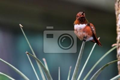 hummingbird protecting nrst