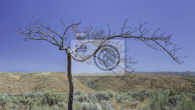Wall mural Idaho desert with a lone tree and blue sky