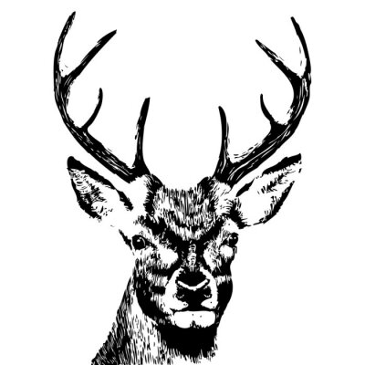Wall mural illustration of a deer head, grunge, silhouette isolated on white