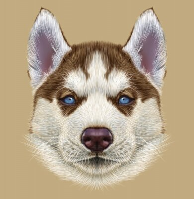 Wall mural Illustrative Portrait of Husky Puppy. Cute portrait of young copper red bi-colour dog with pale blue eyes.