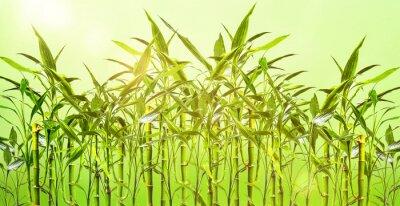 Wall mural junge Bambuspflanzen vor grünem Hintergrund