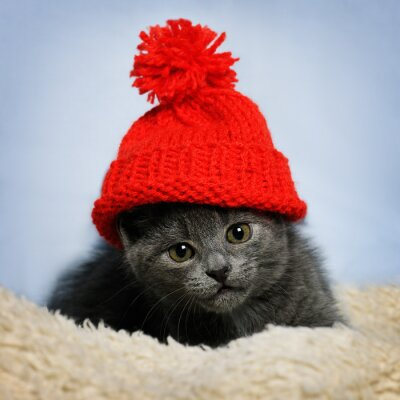 Wall mural kitten in a red hat