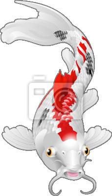 Koi carp oriental fish