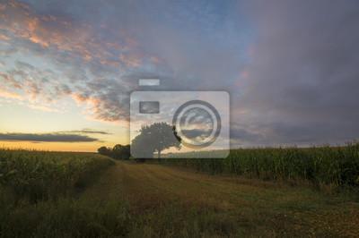Kolorowe niebo nad polem o poranku
