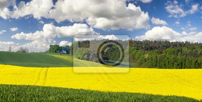 Krajobraz wiejski,pole kwitnącego rzepaku pod lasem