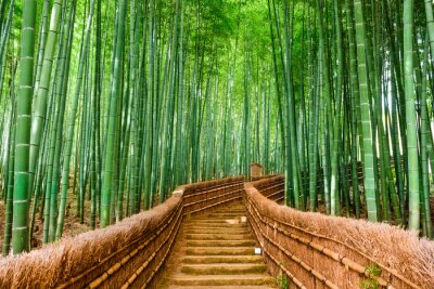 Wall mural Kyoto, Japan Bamboo Forest