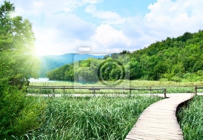 lake in deep forest and wood way