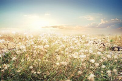 Wall mural Landscape of flower with sun sky, vintage color effect