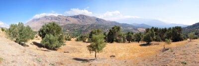 Wall mural Landschaft mit Olivenbäumen auf der Insel Kreta