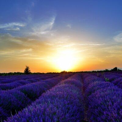 Wall mural Lavender field