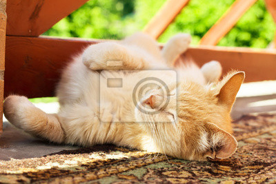 Wall mural Lazy red cat