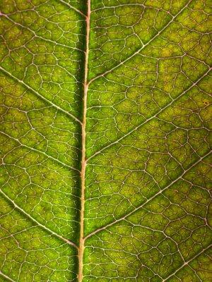 Wall mural leaf macro background