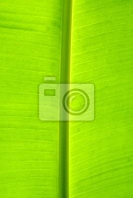 Wall mural leaf of banana palm